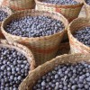 Acai Berries One of the Healthiest Fruits That You Can Eat