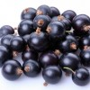 Acai Berry Powder Contents and their Health Benefits