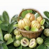 Garcinia Cambogia A Quick Introduction To The New Weight Loss Supplement
