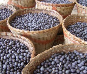 Acai Berries the Healthiest Fruits